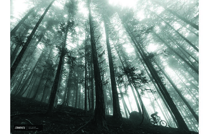 PHOTO PRINT : YOANN BARELLI - BC TREES